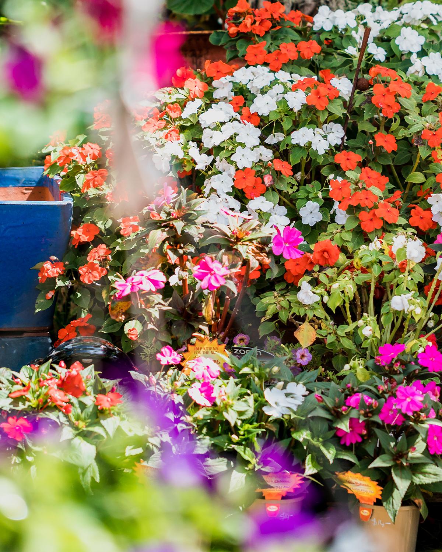 Samford Valley Garden Centre Gardening Club