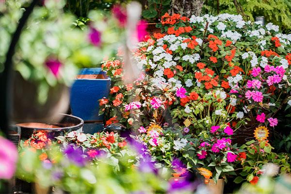 Flowers from Samford Valley Garden Centre